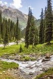 杉木在卡拉科尔峡谷 库存图片