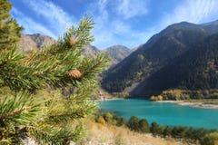 杉木在山湖附近分支 免版税库存照片
