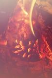杉木在火的锥体特写镜头 免版税库存照片