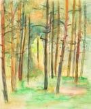 杉木在晴天 免版税图库摄影