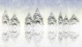 杉木场面多雪的冬天 免版税库存图片
