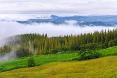 杉木山中间 库存图片