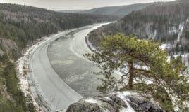 杉木岩石 免版税库存图片