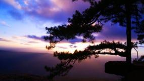 杉木峭壁Pha Lom Sak泰国 免版税库存照片