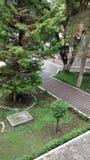 杉木庭院 免版税库存图片