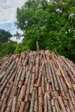杉木日志木火葬用的柴堆  库存照片