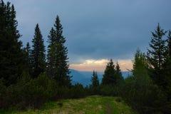 杉木日落结构树 图库摄影