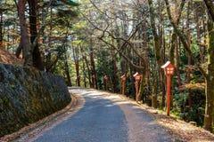杉木有红色杆的森林走廊在寺庙在秋天庭院里 免版税库存照片