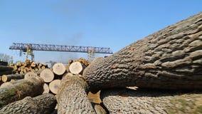 杉木木材和木采伐 影视素材