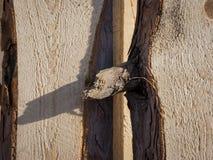 杉木木材的被锯的面孔细节  免版税库存照片