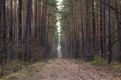 杉木森林储备 免版税库存图片