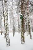 杉木森林冬天风景 鸟舍 免版税库存照片