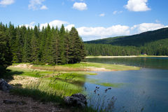 杉木森林包围的湖的岸 免版税图库摄影