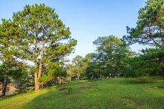 杉木森林和草甸 库存图片