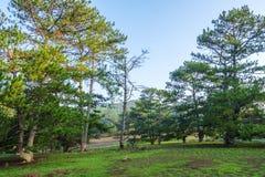 杉木森林和草甸 免版税库存图片