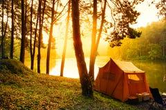 杉木森林场面的露营地 免版税库存照片