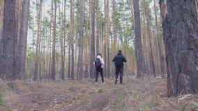 杉木森林,夫妇可爱的背包徒步旅行者徒步旅行者 他们是旅客,自然冒险恋人  生态的研究 股票录像