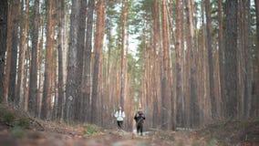 杉木森林,夫妇可爱的背包徒步旅行者徒步旅行者 他们是旅客,自然冒险恋人  生态的研究 股票视频