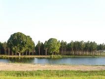 杉木池塘 库存图片