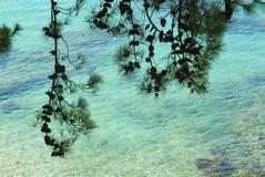 杉木海运结构树 图库摄影