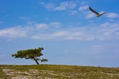 杉木海鸥结构树 免版税库存照片