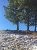 杉木点 库存图片
