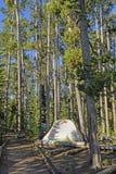 杉木的安静的露营地 图库摄影