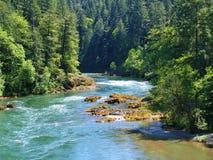 杉木的风景俄勒冈河。 图库摄影