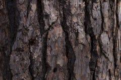杉木纹理 库存照片