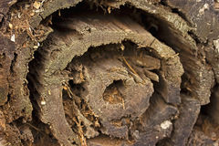 杉木腐烂的树干在春天森林 免版税库存图片