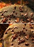 杉木针和烘干叶子 库存照片