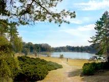杉木针,天空,湖 免版税库存照片
