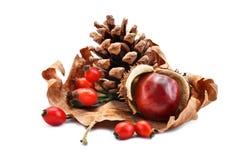 杉木锥体、栗子和臀部干燥秋天生叶 对象 库存照片