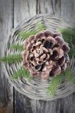 杉木锥体。 免版税库存照片