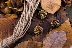 杉木锥体和一条绳索在用干燥叶子报道的背景 免版税库存照片