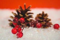 杉木锥体和红色樱桃在雪 库存照片