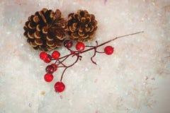 杉木锥体和红色樱桃在雪 免版税图库摄影