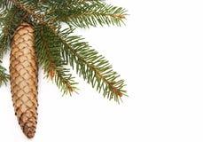 杉木锥体和绿色圣诞树 免版税库存照片