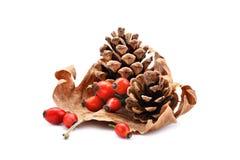 杉木锥体和野玫瑰果干燥秋天生叶 背景查出的对象牌 免版税库存照片