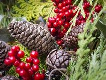 杉木锥体和霍莉莓果 库存照片