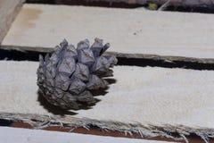 杉木锥体在木板条地板说谎  免版税库存图片