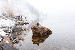 杉木锥体坐在Convict湖的一个岩石 免版税库存照片