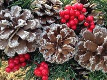杉木锥体用雪和霍莉莓果 免版税库存图片