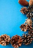 杉木锥体的不同的大小 图库摄影