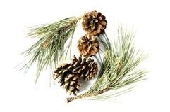 杉木锥体的图片作为装饰品在家使用的 库存照片