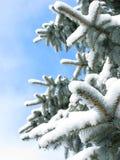 杉木雪结构树 免版税图库摄影