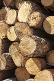 杉木,木头树干  库存图片