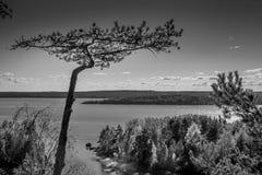 杉木黑白照片和Ladoga湖咆哮 免版税图库摄影