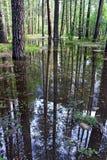 杉树优胜美地,优胜美地国家公园的反射 库存照片