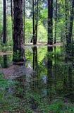 杉树优胜美地,优胜美地国家公园的反射 库存图片